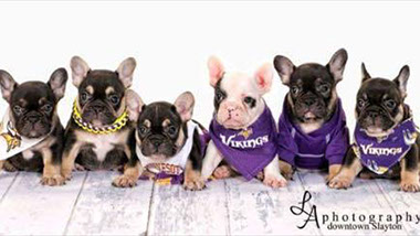 French Bulldog Puppies South Dakota